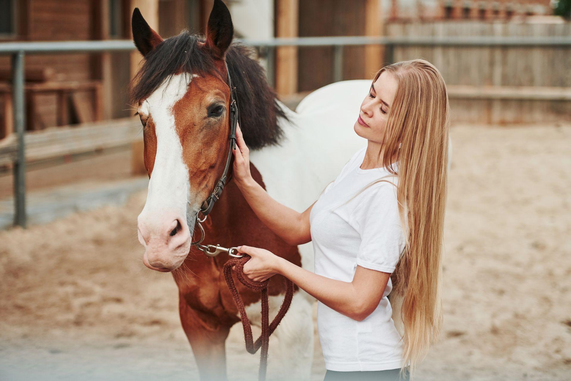 Pferdegestütztes Kommunikationstraining